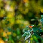 kwiatki_02