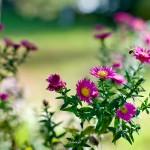 kwiatki_07