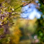 kwiatki_11
