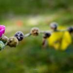 kwiatki_13