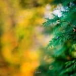 kwiatki_15