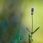 kwiatki_19