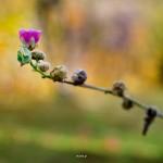 kwiatki_33